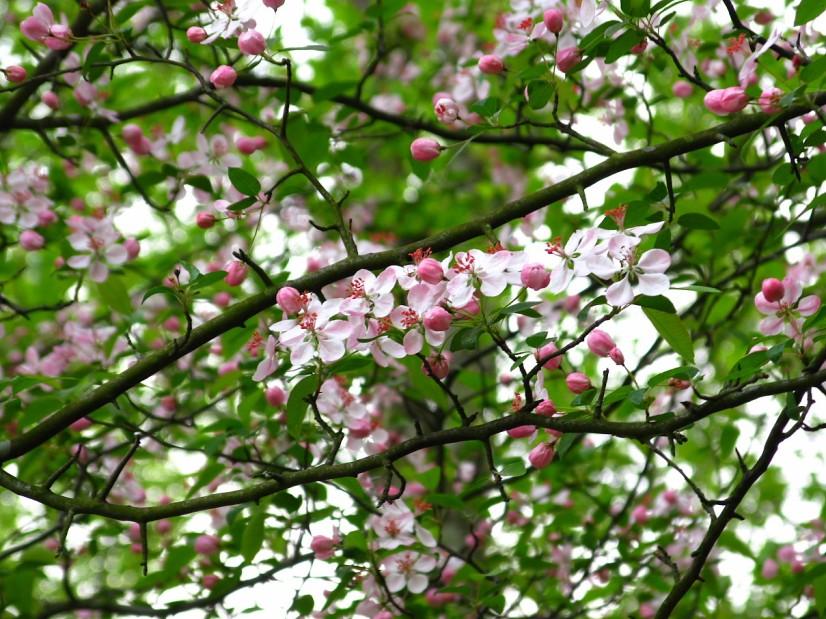 flowery-tree-spring